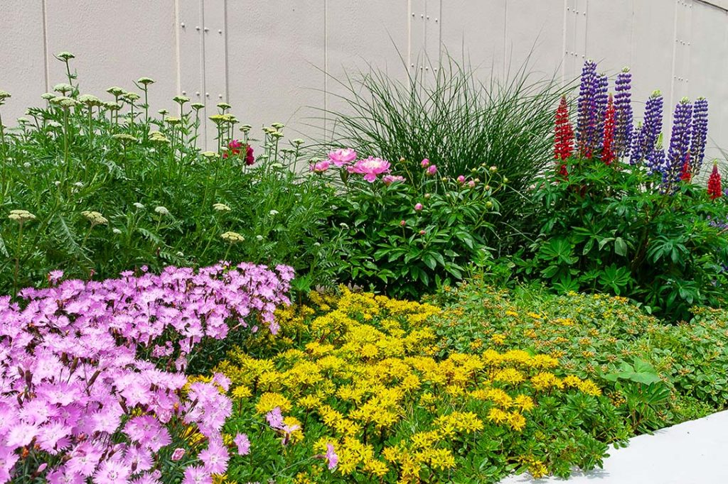 A mixed planting in a perennial garden to emphasize the use of variety when designing a garden
