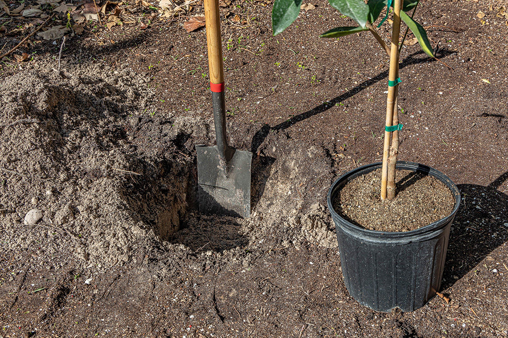 Measuring planting hole depth with a spade